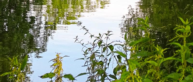 water van de gracht in Utrecht met planten op de voorgrond
